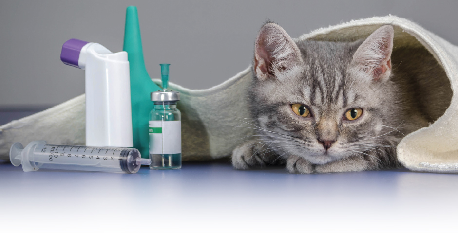 A Policy For Fluffy Pet Insurance Is A Small Industry But It S