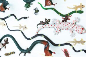 Snakes, Caterpillers, and Other Critters